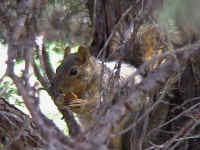 squirrel02.jpg (67209 bytes)